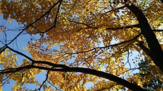 autumn-leaves-2017
