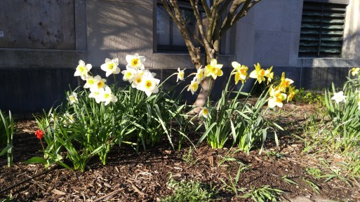 Early-Spring.jpg
