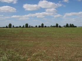 fallow-field